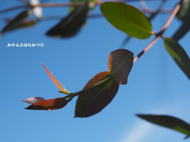 ブログPB075084.jpg