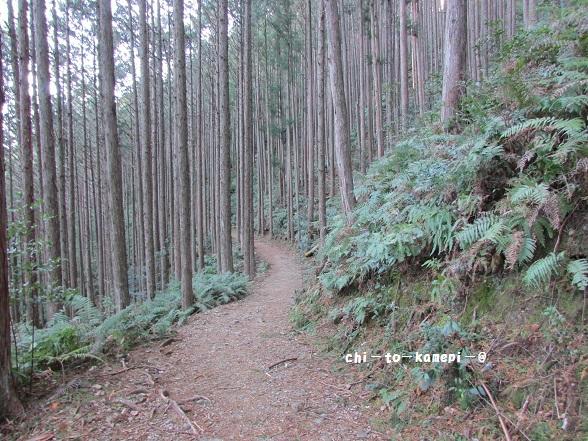 IMG_3094杉の古道.jpg