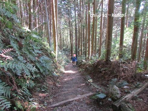 IMG_3302 杉.jpg