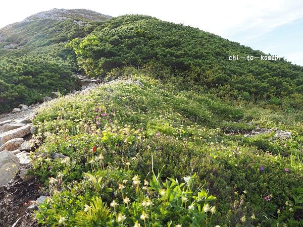 P7012289お花畑.jpg